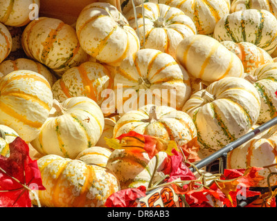 Pumpkins of various sizes are on display at a San Francisco grocery. - Stock Photo