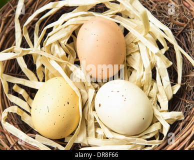 Three colored, spotted eggs in a nest Stock Photo