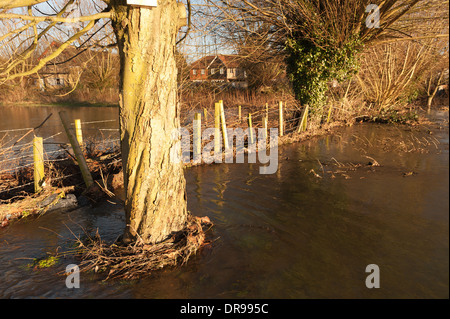 Misery for home owners as river Darent overflows into surrounding countryside at Eynesford creating new floodplain - Stock Photo