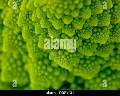 romanesco cauliflower - Stock Photo