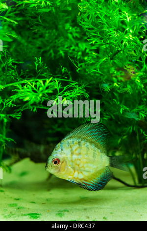 Trpoical fish for sale at a aquarium centre stock photo for Stock fish for sale
