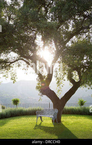 Bench under tree in calm park - Stock Photo
