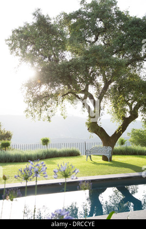 Bench under tree in calm garden - Stock Photo