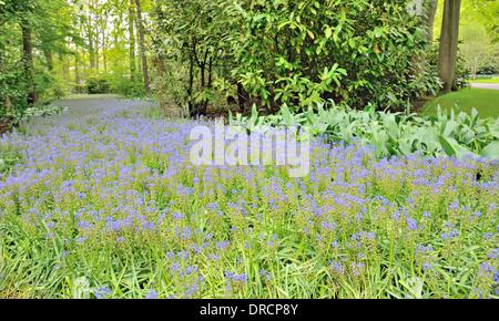 flowerbeds in the Keukenhof park, The Netherlands - Stock Photo