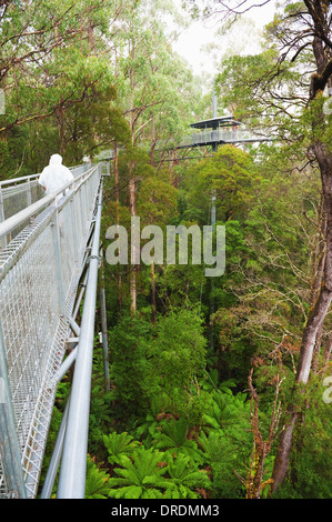 The steel walkway Otway Fly in the Rainforest up to 30 meters above ground level,Great Ocean Road, Australia - Stock Photo
