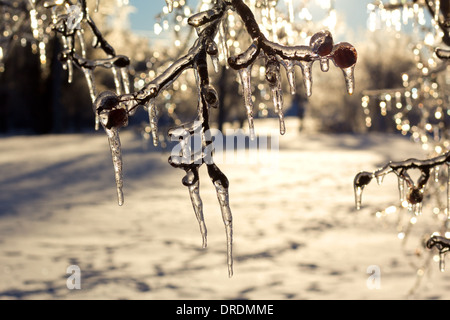 Beautiful icicles on trees after an extreme icestorm. - Stock Photo