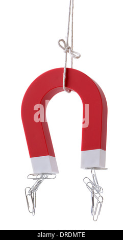 A horse shoe magnet picking up paper clips isolated on a white background - Stock Photo