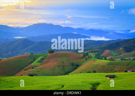Fresh terrace rice field over the mountain range and beautiful sunset. - Stock Photo