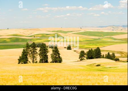 View of the Palouse Hills from Kamiak Butte State Park, Whitman County, Washington, USA. - Stock Photo