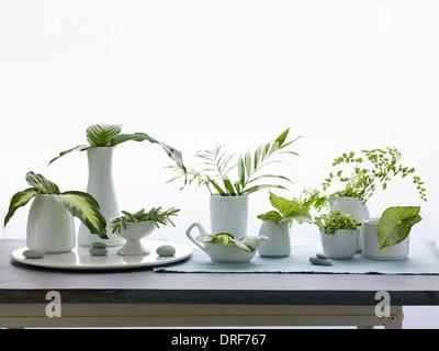 Maryland USA jugs vases green leaves and foliage Studio shot - Stock Photo