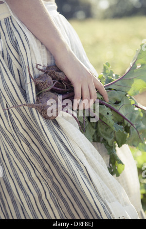 Maryland USA girl in skirt beets fresh vegetablesfield of crops - Stock Photo