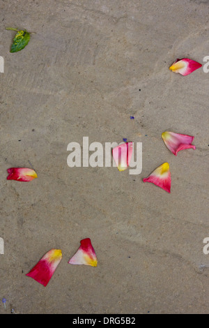 Rose petals scattered on a pavement - Stock Photo