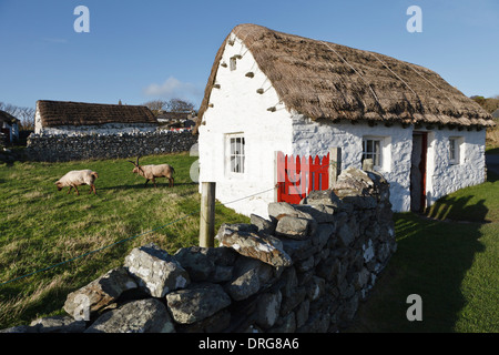 Crofter's cottage and Loghtan sheep, Cregneash National Folk Museum, Isle of Man - Stock Photo
