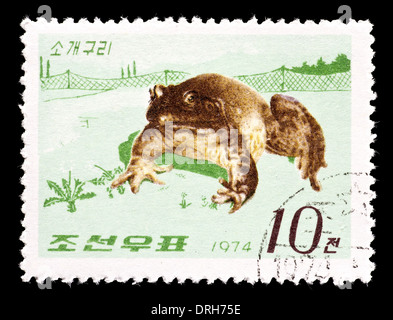 Postage stamp from North Korea depicting a north American bull frog. - Stock Photo