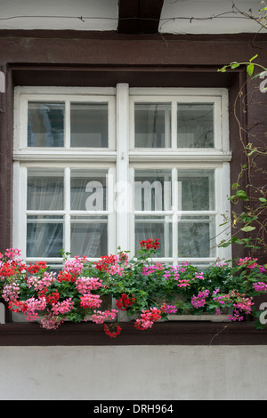 Window of medieval house with geraniums in window box, Old Basel, Switzerland - Stock Photo