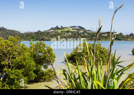 A view over New Zealand native flax and New Zealand mangrove to the town of Coromandel in the Coromandel Peninsula, - Stock Photo