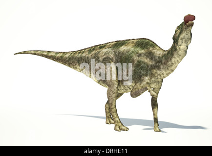 Maiasaura dinosaur, full body photo-realistic representation, scientifically correct. Dynamic view, On white background. - Stock Photo