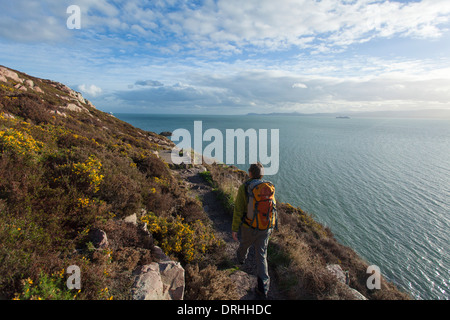 Walker on the Bog of Frogs Loop near Red Rock, on Howth Coastal Path, County Dublin, Ireland. - Stock Photo