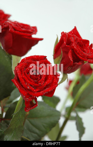 Bouquet of red rose. You can see water drops on the leafs - Stock Photo