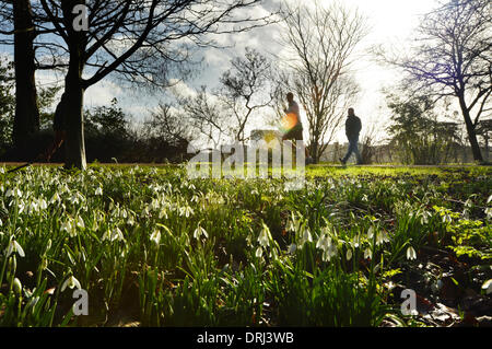 University Parks, Oxford, Oxfordshire, UK. 27th Jan, 2014. A jogger enjoys the mild winter weather as Snow drops - Stock Photo