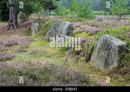 Passage grave at Oldendorfer Totenstatt, megalithic site in Oldendorf near Amelinghausen, Lueneburg Heath, Lower - Stock Photo