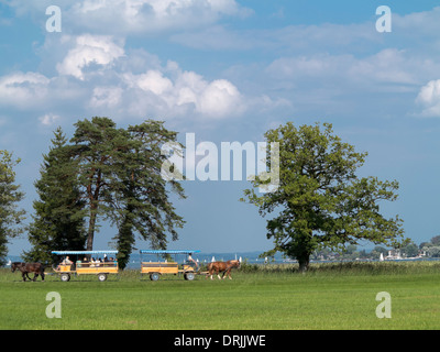 Horse Carriage Trip - Stock Photo
