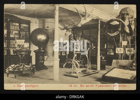 Skeletons of a mammoth and a giant elk in the UOLE Museum in Yekaterinburg, Russian Empire. Old postcard. - Stock Photo