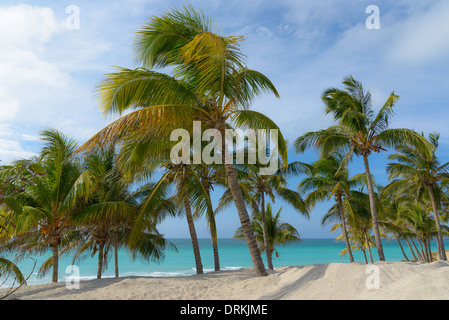 Landschaft Virgin Island Karibik