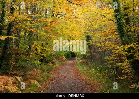 Autumnal walking path through Tourmakeady Woods, County Mayo, Ireland. - Stock Photo