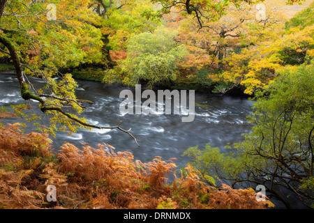 Autumn oak woodland along the Owenmore River, County Mayo, Ireland. - Stock Photo