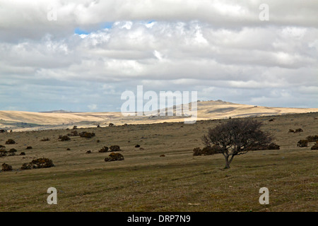 View on Dartmoor National Park, a huge area of moorland and granite hilltops in South Devon, England, Great Britain, - Stock Photo
