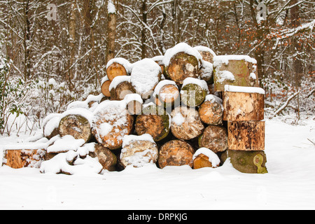 Firewood at the edge of the forest, snow - Stock Photo
