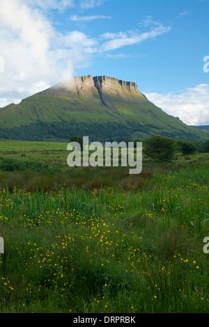 Wildflower meadow beneath Benwiskin mountain, Co Sligo, Ireland. - Stock Photo