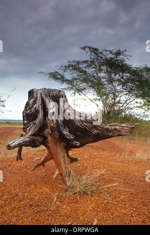 Dry tree and eroded soil in Sarigua National Park (desert) in the Herrera province, Republic of Panama. - Stock Photo