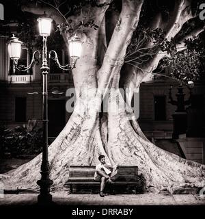 Ficus macrophylla tree in Reggio Calabria's Lungomare, Italy - Stock Photo