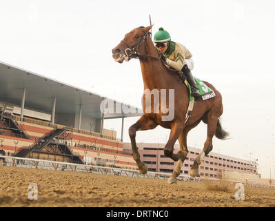 Ozone Park, New York, USA. 1st Feb, 2014. Samraat, ridden Jose Ortiz, wins the Withers Stakes at Aqueduct Race Track - Stock Photo