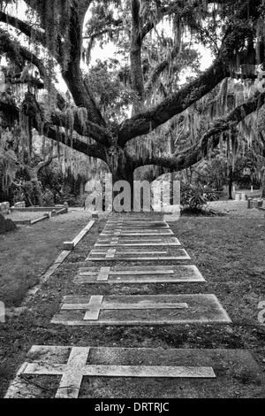 A line of gravestones leads to a live oak tree covered in Spanish moss. Converted to black and white. - Stock Photo