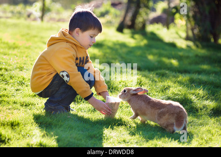 Little boy feeding rabbit in farm - Stock Photo