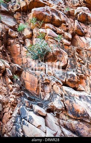 Tree in West Macdonnel ranges - Stock Photo