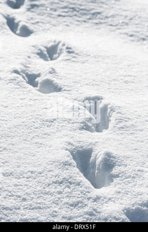 Animal tracks in deep snow in winter - Stock Photo