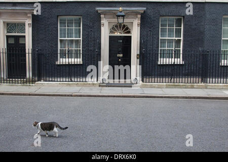 Westminster London, UK. 3rd February 2014. Larry the cat is seen outside Downing Street, London, UK. Credit:  amer - Stock Photo