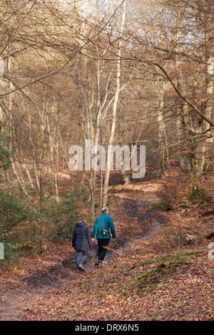 A couple walking in Burnham Beeches in  winter, - woods in Burnham, Buckinghamshire England UK