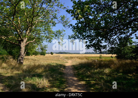 Wanstead Flats, just to the north of Forest Gate, Newham, London, E7 - Stock Photo