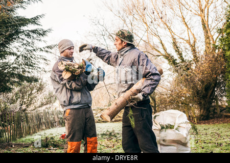 Professional gardeners pruning trees. - Stock Photo