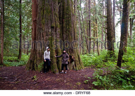 Two female hikers resting beside a huge old growth cedar tree in the Great Bear Rainforest, Larso Bay, British Columbia, - Stock Photo