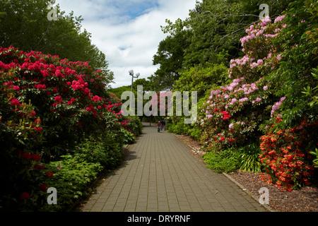 Spring Flowers Botanic Gardens Queens Belfast Lanyon