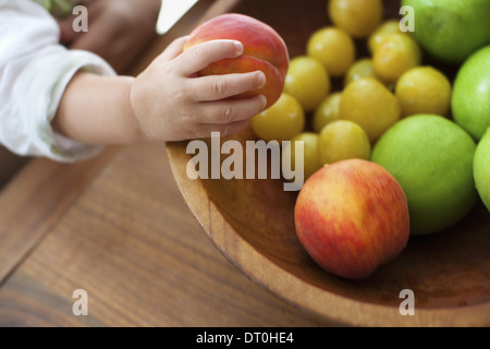 New York state USA small child one year old girl grasping fruit - Stock Photo