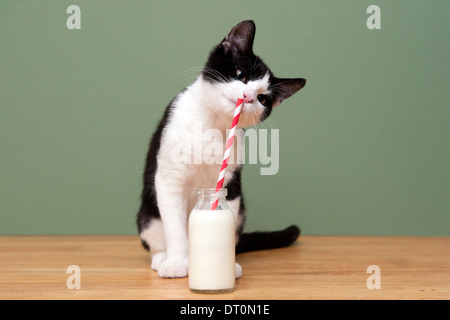 A cat drinking milk from a straw in a milk bottle - Stock Photo