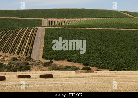 Vineyards on a hill in the Durbanville area, Cape Town, South Africa, with bales of hay in the foreground