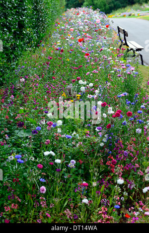 Wildflower Wildflowers Bed Bedding Display Border Borders Annual Annuals Garden  Gardening Design Mix Mixed Combination